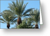 Barks Greeting Cards - Palm Tree Heads Greeting Card by Deborah Smolinske