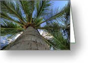 Tropical Greeting Cards - Palm Tree Greeting Card by Kelly Wade
