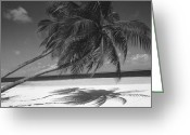 Sand Beaches Greeting Cards - Palm tree shadow on sand Greeting Card by Anonymous