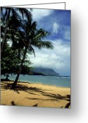 Featured Landscape Art Greeting Cards - Palm Tree Shadows Greeting Card by Kathy Yates