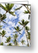 Caribbean Sea Greeting Cards - Palm trees Greeting Card by Elena Elisseeva