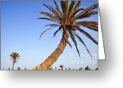 Color Bending Greeting Cards - Palm trees on clear sky Greeting Card by Sami Sarkis