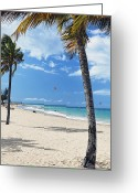 Sunbathing Trees Greeting Cards - Palm Trees on Ocean Park Beach Greeting Card by George Oze