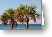 Panama City Beach Greeting Cards - Palm Trees Greeting Card by Sandy Keeton