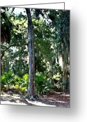 Driveways Greeting Cards - Palms Amongst The Oaks Greeting Card by Jim Goldseth