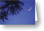Tropical Climate Greeting Cards - Palms And Crescent Moon Greeting Card by Anne Rippy
