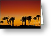 Shadow Greeting Cards - Palms at Sunset Greeting Card by Nadya Ost