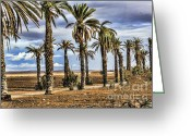Rabat Greeting Cards - Palms Morocco I Greeting Card by Chuck Kuhn