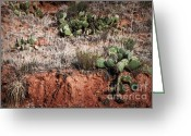Palo Duro Canyon State Park Greeting Cards - Palo Duro Cactus Greeting Card by Fred Lassmann