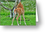 Horse Greeting Cards - Palomino and Birch Greeting Card by Emily Stauring