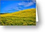 Rapeseed Greeting Cards - Palouse Canola Fields Greeting Card by David Patterson