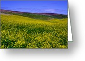Rapeseed Greeting Cards - Palouse Hills Canola Fields Greeting Card by David Patterson