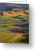 Wheatfields Photo Greeting Cards - Palouse Hills Greeting Card by Mike  Dawson