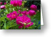 Flower Still Life Prints Greeting Cards - Pams Perfect Peonies Greeting Card by Liz Evensen