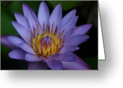 Water Gardens Greeting Cards - Panama Pacific Tropical Water Lily Greeting Card by Sharon Mau