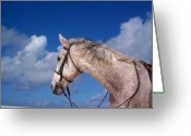 Horse Greeting Cards - Pancho Greeting Card by Mary-Lee Sanders