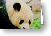 Panda Greeting Cards - Panda  Greeting Card by Cheryl Young