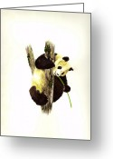 Panda Greeting Cards - Panda Greeting Card by Michael Vigliotti