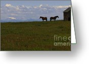 Shed Greeting Cards - Panorama Of Alberta Greeting Card by Al Bourassa