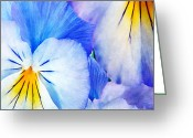 Tricolor Greeting Cards - Pansies in Blue Tones Greeting Card by Darren Fisher