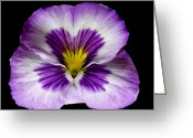 Flower Works Greeting Cards - Pansy. Greeting Card by Chris  Kusik