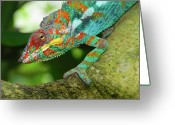 Panther Greeting Cards - Panther Chameleon Greeting Card by Dave Stamboulis Travel Photography