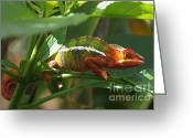 Rudi Prott Greeting Cards - Panther Chameleon Madagascar Greeting Card by Rudi Prott
