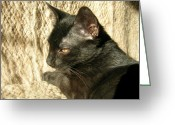 Zsuzsa Balla Greeting Cards - Panther  Greeting Card by Zsuzsa Balla