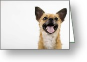 Panting Dog Greeting Cards - Panting Dog Greeting Card by Jupiterimages