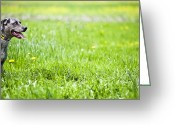 Panting Dog Greeting Cards - Panting Dog Standing In Meadow Greeting Card by Stock4b-rf