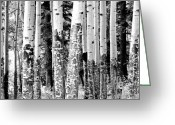 Black Elk Greeting Cards - Paper Birch Greeting Card by Julie Lueders