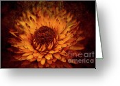 Summers Greeting Cards - Paper Daisy Greeting Card by Wenata Babkowski