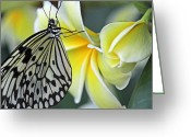 Kites Greeting Cards - Paper kite butterfly on plumeria Greeting Card by Becky Lodes