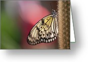 Thorn Greeting Cards - Papillon Greeting Card by Pndtphoto