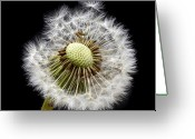 "\\\\\\\""square Art\\\\\\\\\\\\\\\"" Photo Greeting Cards - Parachute Seeds Greeting Card by Terence Davis"