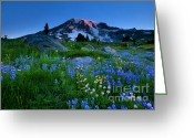 Aster  Photo Greeting Cards - Paradise Garden Dawning Greeting Card by Mike  Dawson