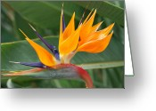 Designers Choice Photo Greeting Cards - Paradise II Greeting Card by Don  Wright
