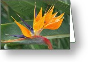 Bletila Striata Greeting Cards - Paradise II Painting Greeting Card by Don  Wright