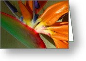 Bird Of Paradise Greeting Cards - Paradise Morning Greeting Card by James Temple