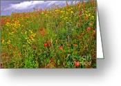Texas Wildflowers Greeting Cards - Paradise Regained Greeting Card by Chuck Taylor