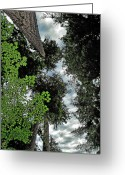 Olympic National Park Greeting Cards - Paradise to lovers of big trees - Olympic National Park WA Greeting Card by Christine Till
