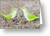 Canary Greeting Cards - Parakeet Greeting Card by Alex Bramwell
