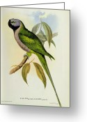 Tail Feather Greeting Cards - Parakeet Greeting Card by John Gould