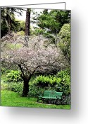 Golden Gate Park Greeting Cards - Park Bench at The Old Cherry Blossom Tree . 7D5804 Greeting Card by Wingsdomain Art and Photography