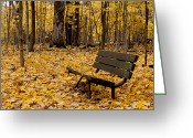 Maple Photographs Greeting Cards - Park Bench Covered in Gold Greeting Card by Jim Finch