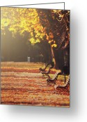 Empty Park Bench Greeting Cards - Park Benches In Fall Greeting Card by Julia Davila-Lampe