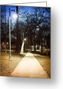 Deserted Greeting Cards - Park path at night Greeting Card by Elena Elisseeva