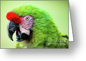 Veterinarian Greeting Cards - Parrot Greeting Card by Sebastian Musial