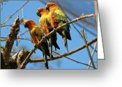 Gossiping Greeting Cards - Parrot Siesta Greeting Card by Mariola Bitner