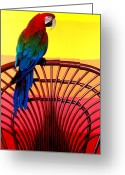Wicker Chairs Greeting Cards - Parrot Sitting On Chair Greeting Card by Garry Gay